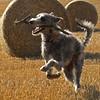 Padaidh's harvest dance.<br /> <br /> 03/09/13