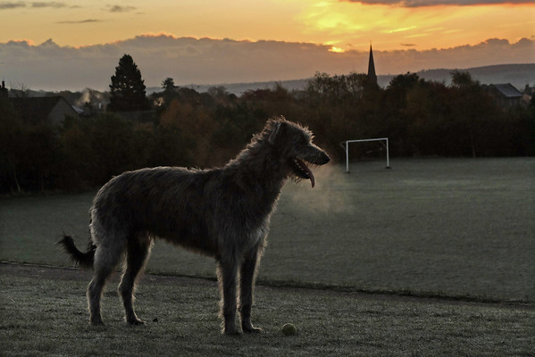 Around this time of year his early morning romp coincides with the sunrise.<br /> <br /> 7.30am, 05/11/13