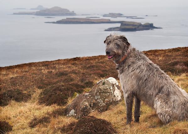 That's the Treshnish Islands, pup.<br /> <br /> 22/03/16