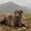 On Beinn Mhanach (Munro #9).<br /> <br /> 20/06/13