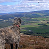 Pad on Morven, intrigued by a paraglider.<br /> <br /> 29/04/12