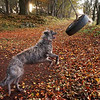 Playing with this tyre swing is one of his 20 or so favourite pastimes.<br /> <br /> 03/11/12
