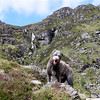 In the Corrie Fee, on the way to his first Munros.<br /> <br /> 02/06/12