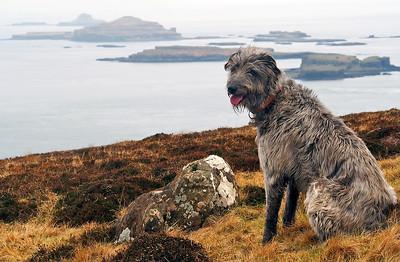 That's the Treshnish Isles, pup.  22/03/16