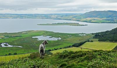 Benarty Hill, above Loch Leven  2/08/15