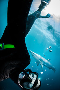 "<h2 class=""notopmargin"">Bio</h2>  <p>Thanks for stopping by. I am currently a masters student at Scripps Institution of Oceanography studying marine biodiversity and conservation. I believe photography is an excellent tool to raise awareness and promote environmental advocacy.</p>  <p>My images have been used for educational and promotional purposes for many conservation publications. Also, most images are for sale and if you would like to purchase some please contact me.</p>  <p>Feel free to follow on <a href=""https://www.facebook.com/ralfotos"" target=""_blank"">facebook</a> as I post there quite often.</p>  <p>You can contact me by email <a href=""mailto:ralphpace@gmail.com"">here</a>.</p>"