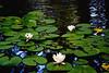 pond painting_4074
