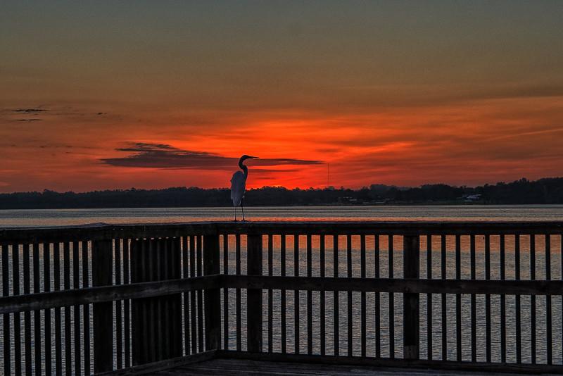 Heron Enjoying Sunrise