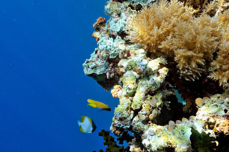 """""""Big Drop-off"""" left, coral right."""