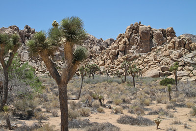 Our first day we went to Joshua Tree National Park