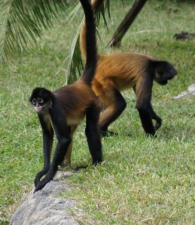 palm beach zoo 11 27 12