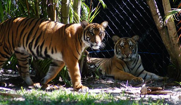 palm beach zoo   31712