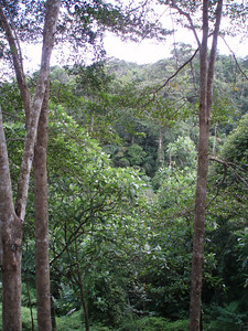 Forest view from the cabana deck.