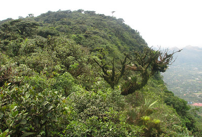 Top of Cerro Gaital, the source of four rivers