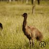 Emu - P1150457