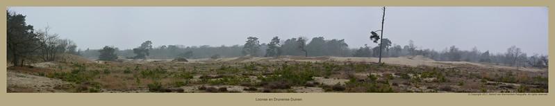 20170219 Loonse en Drunense Duinen Pano2