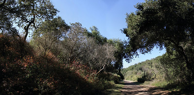 Colorful foliage along the Rogue Valley Trail at Rancho San Antonio County Park.   9--image panorama.