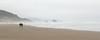 Cannon Beach Shore