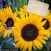 Sunflowers in market