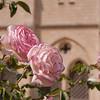 Roses at Rodin