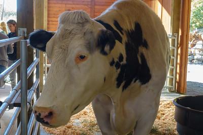 Pasado's Cow Barn