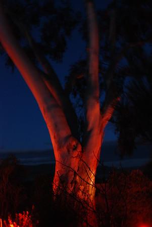 Pats Tree