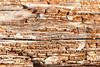 Rotting Wood Close Up