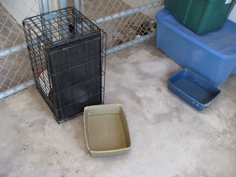 bleach foot baths for puppy quarantine area