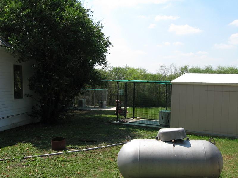 puppy building post-quarantine