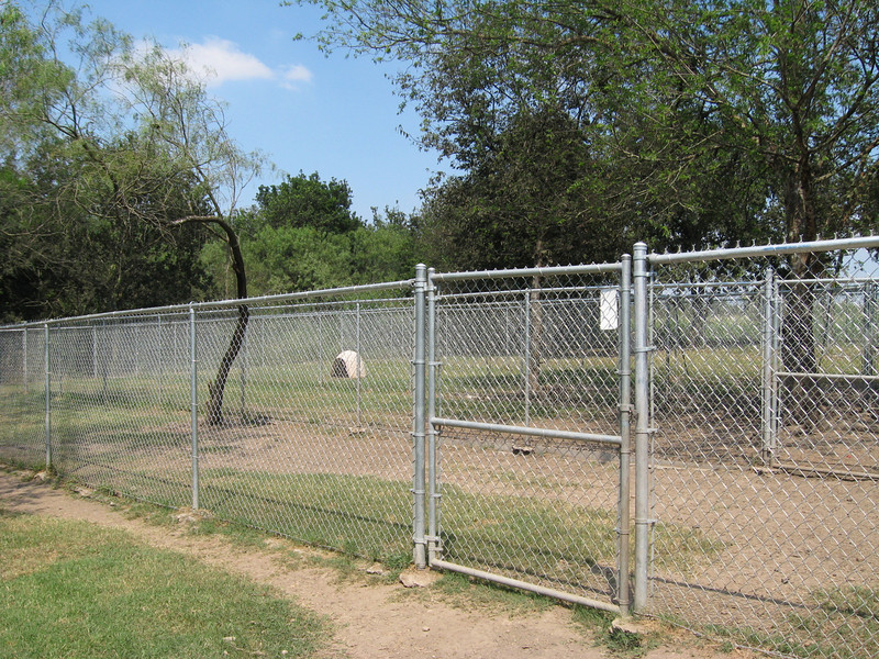 adult dog area