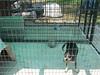 puppy quarantine