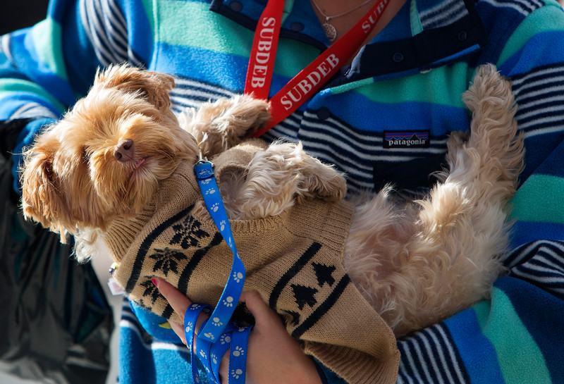 BANGOR, Maine -- 09/30/2017 - Graci Wiseman carries Sophie during the 24th annual Paws on Parade event at the Bangor Waterfront Saturday. The event featured a variety of sponsors, vendors, and highlights such as a pet costume contest and shelter dog runway show. The event helps raise funds to support the Bangor Humane Society. Ashley L. Conti   BDN