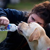 BANGOR, Maine -- 09/30/2017 - Chelsea Cyr gives her yellow lab, Porter a drink of water during the 24th annual Paws on Parade event at the Bangor Waterfront Saturday. The event featured a variety of sponsors, vendors, and highlights such as a pet costume contest and shelter dog runway show. The event helps raise funds to support the Bangor Humane Society. Ashley L. Conti | BDN
