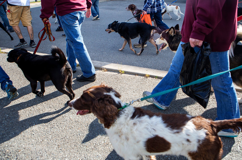 BANGOR, Maine -- 09/30/2017 - Dogs and their owners walk during the 24th annual Paws on Parade event at the Bangor Waterfront Saturday. The event featured a variety of sponsors, vendors, and highlights such as a pet costume contest and shelter dog runway show. The event helps raise funds to support the Bangor Humane Society. Ashley L. Conti   BDN