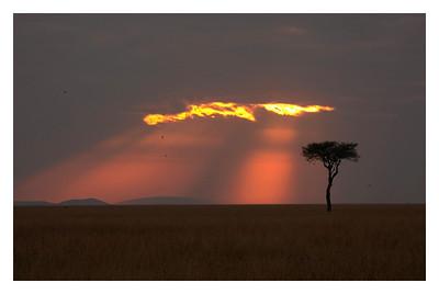 Kenya 2010-Masai Mara
