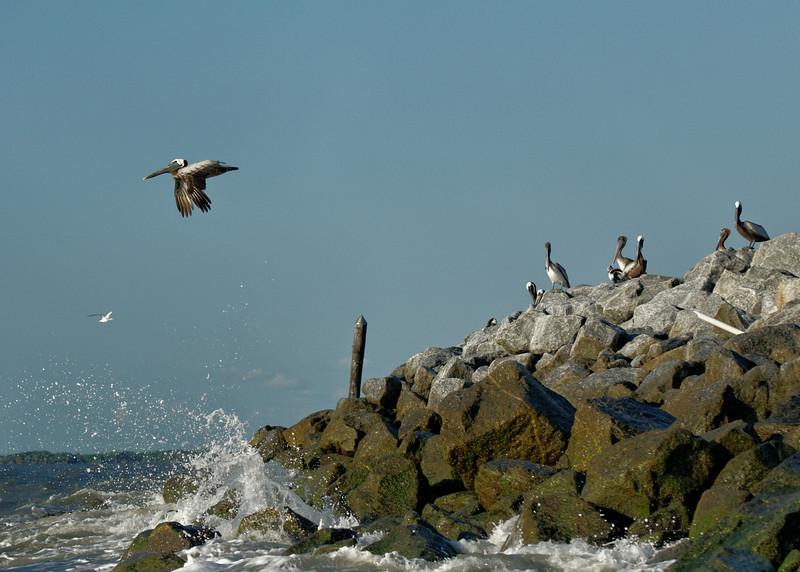 On the Rocks - Tomkins Island