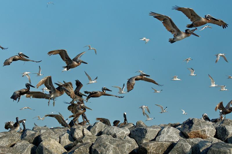Crowded Skies