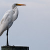 Egret on a Pedestal