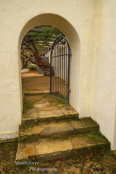 Wisteria in courtyard Monterey