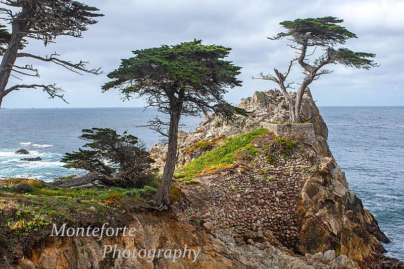 Lone Cypress Pebble Beach Ca
