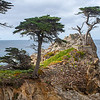 Lone Cypress Pebble Beach Ca