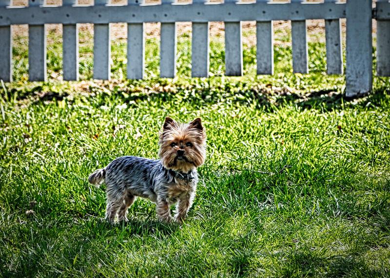 Puppy! (1 of 1)