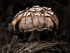 This mushroom was along the trail in Lake Superior Provincial Park ON (near Katherine Cove).  October 2012.