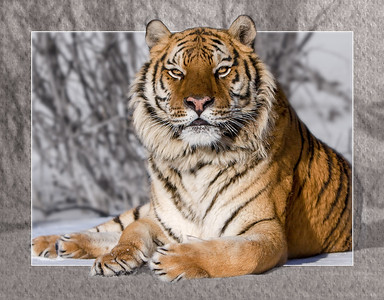This image was created back in 2009, when I used it in a calendar. It was created using 4 layers in photoshop - the original photo was duplicated so the warmth and saturation of foreground and background could be controlled separately. Then the transparent border and solid white line were added on top, wth a mask applied to remove the unwanted bits.