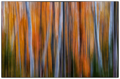 Experimenting with camera panning. Madeleine Island - Big Bay State Park (Wisconsin).