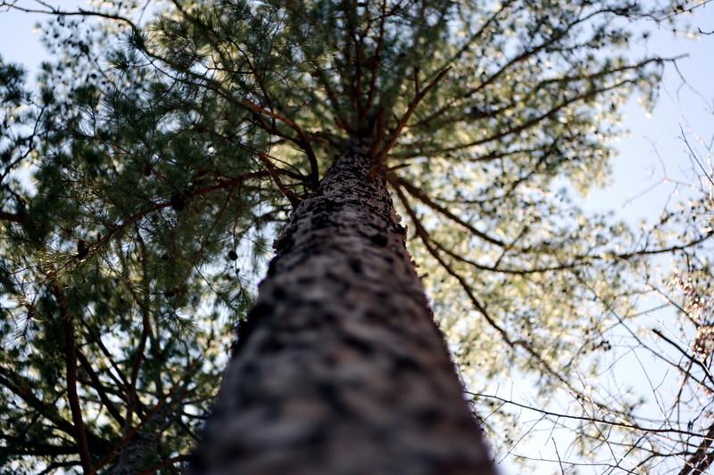 I hug trees