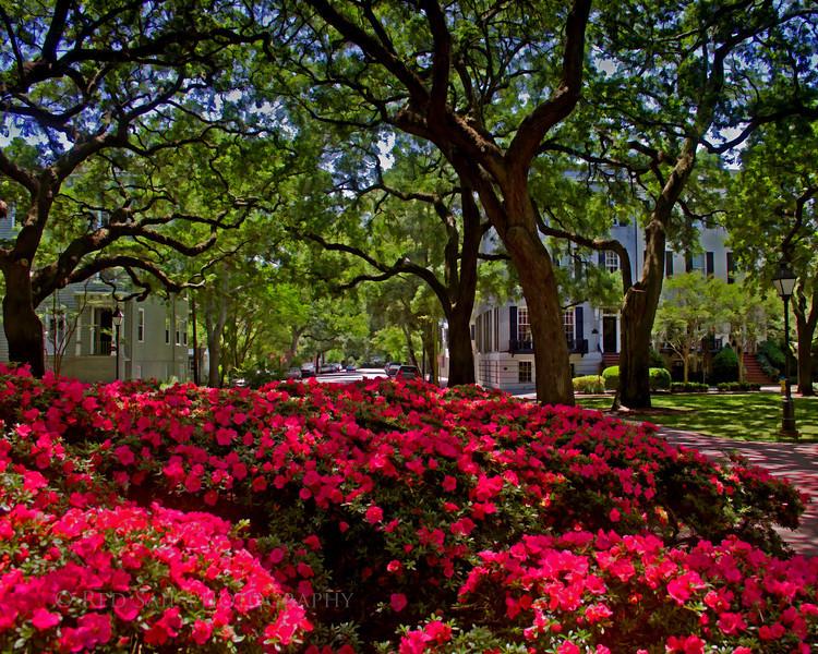 """""""Afternoon in Savannah"""""""