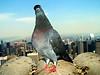 bird portfolio
