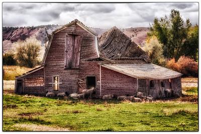 Digitally modified old sheep barn, near Buffalo Wyoming (Sept 2012)