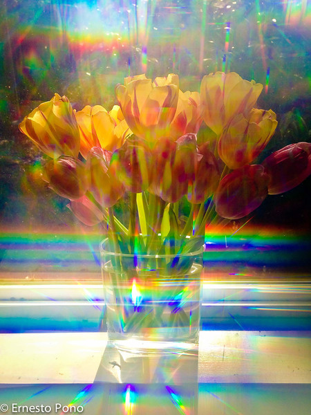 For week ending 18-Feb-2012<br /> <br /> OK, I cheated a little.  I took this with my iPhone a couple of weeks ago.  :-)<br /> <br /> It's a picture of some tulips on my kitchen windowsill.  The effect is from a cheap pair of 3D glasses.  It's kinda cool (at least to me).